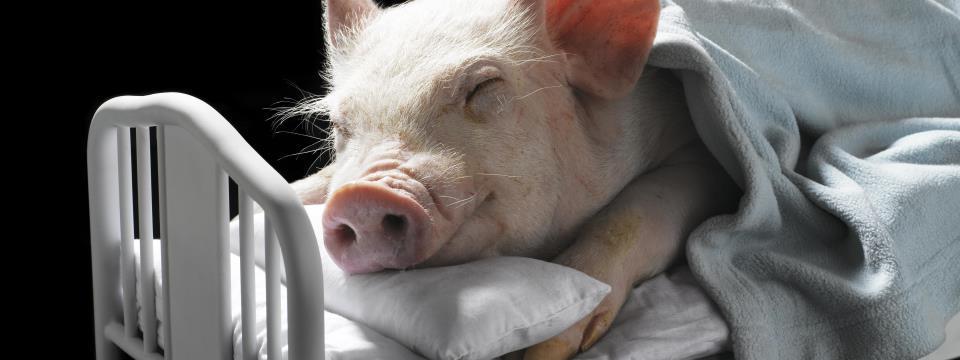 sleep-better-diet