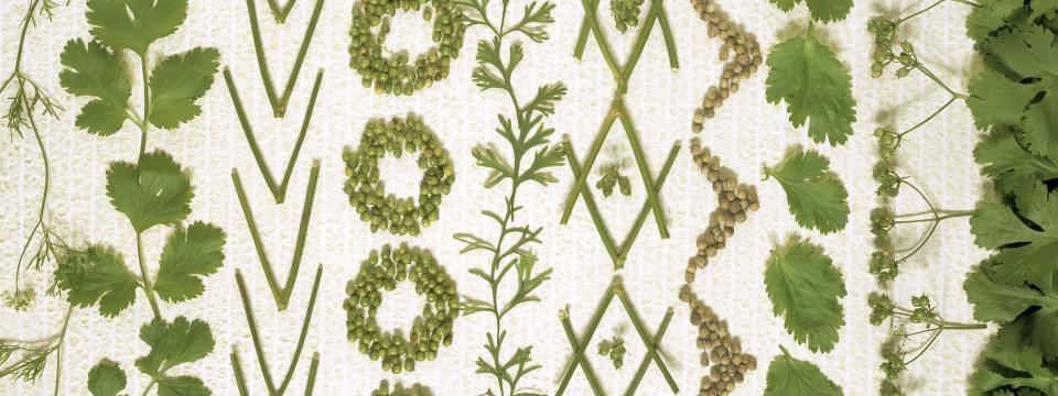 microgreens, greens, vegetables, tiny, nutrition,