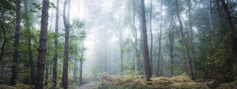 forest bathing, forest, spa, meditation