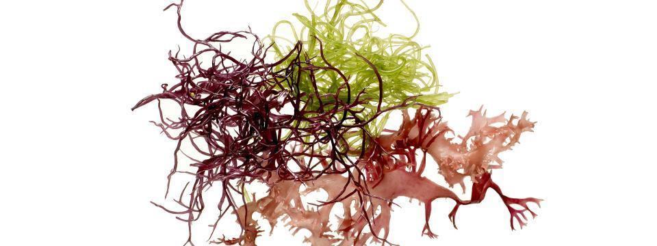 seaweed, antioxidants, surf 'n turf, vitamins, minerals, iron, folate, protein