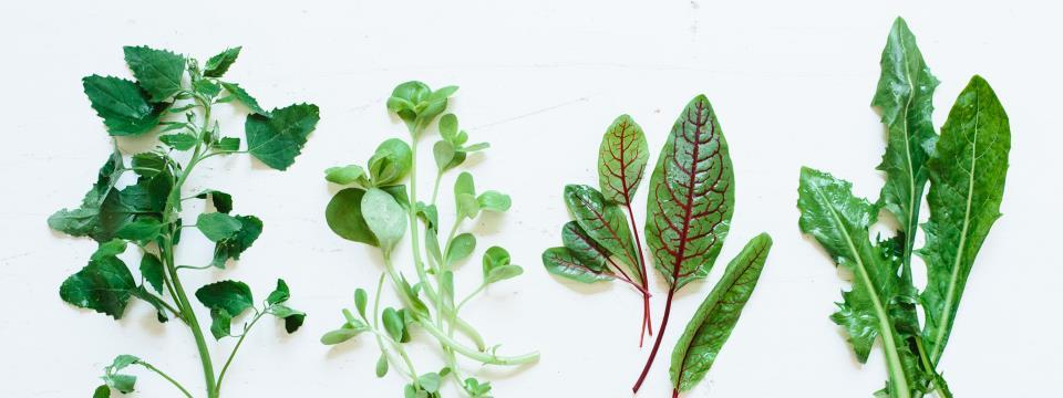 weeds, edible weeds, weeds you should be eating