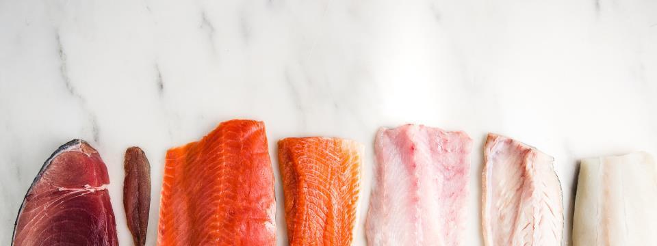 colorful fish, fish