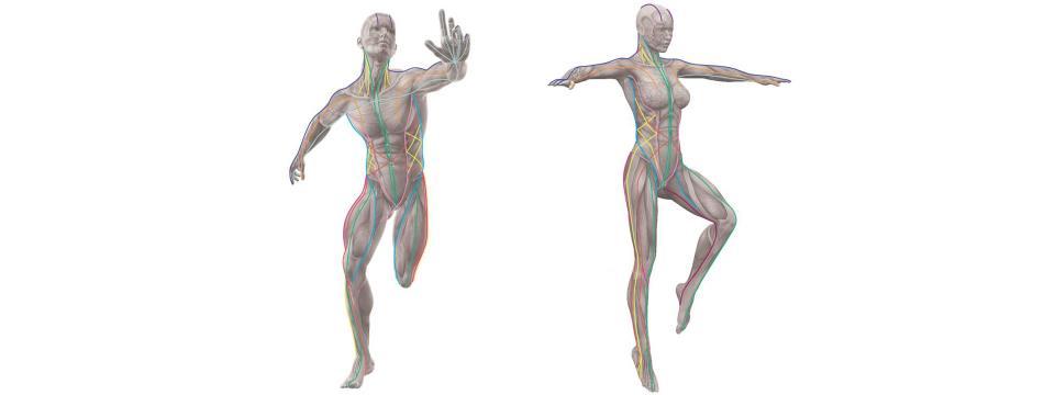 foam rolling, anatomy trains, mistakes, Tom Myers, fascia