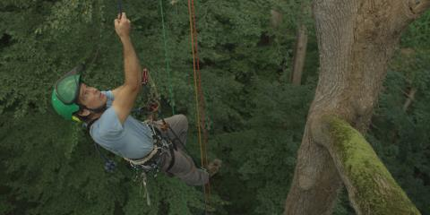tree climbing, arborist,