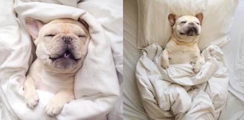 dog, sleeping, bed