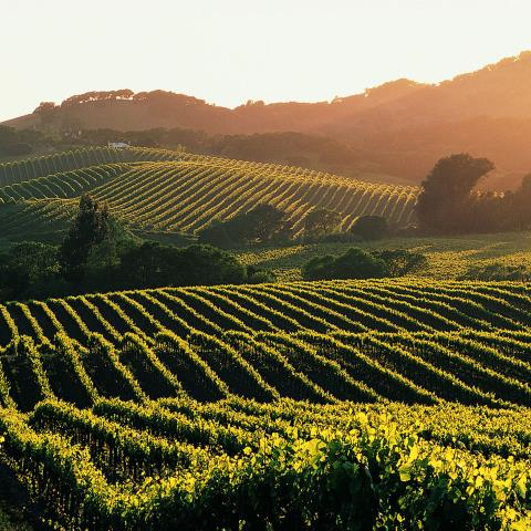 Sonoma, california, Valley, travel, guide