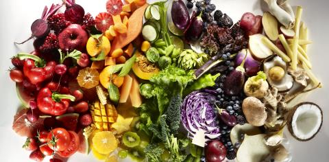 gut health, nutrition, food,science, research