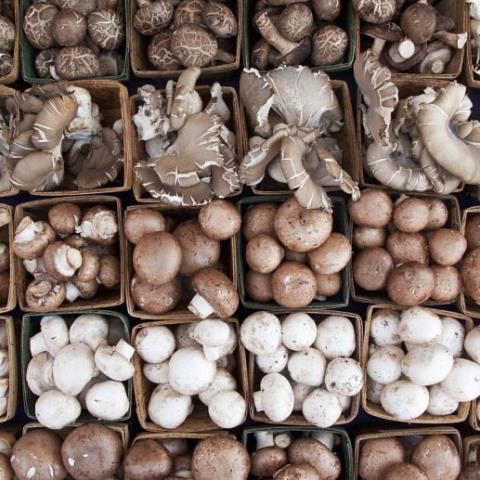 mushrooms, breakfast