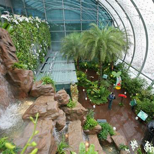 walking path, Changi International Airport, rooftop cactus, sunflower gardens, butterfly enclosure, airport, nature, travel, health, fitness
